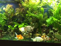 100 gallon planted aquarium improved with GroBeam LED over T5 lights