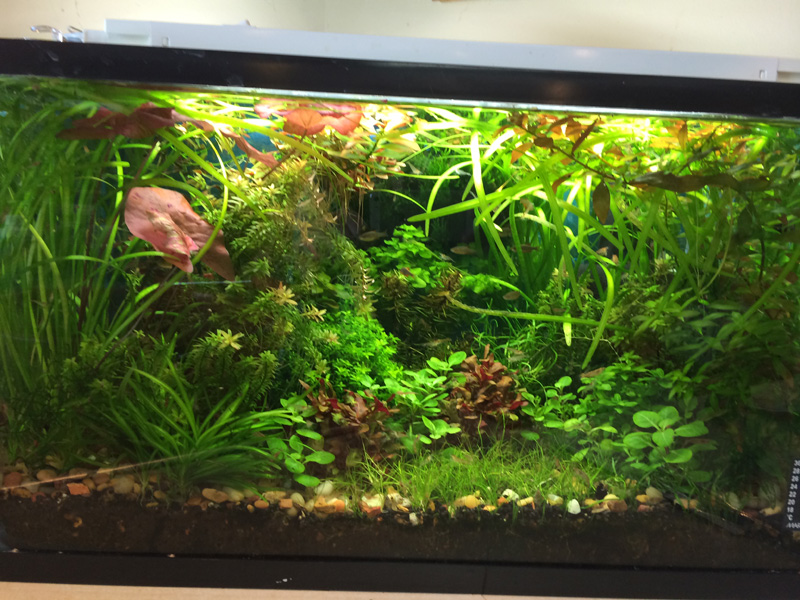 T 2 Subminiature Aquarium Lighting Via Aqua T8 Light