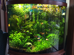 Freshwater aquarium with AAP GroBeam LED lighting