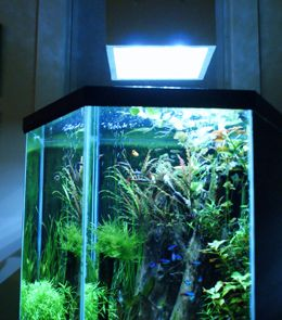 35 Gallon Oceanic Aquarium with GroBeam LED Light