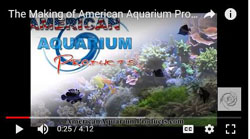 AAP, American Aquarium YouTube Home