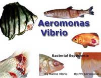 Aeromonas, Septicemia, Furunculosis, Vibrio in aquarium fish