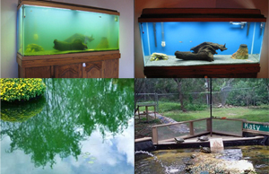 Aquarium and Pond with Green Water Cleared by UV Sterilizer, Clarifier Sterilization