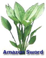 Amazon Sword aquarium plant