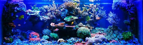 TMC AquaRay Indoor Reef Aquarium Best LED Lighting at National Oceanography Centre