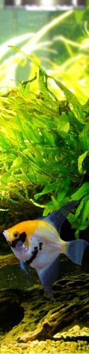 Aquarium Plants, planted tank, care, fertilizers, CO2, substrate, lighting