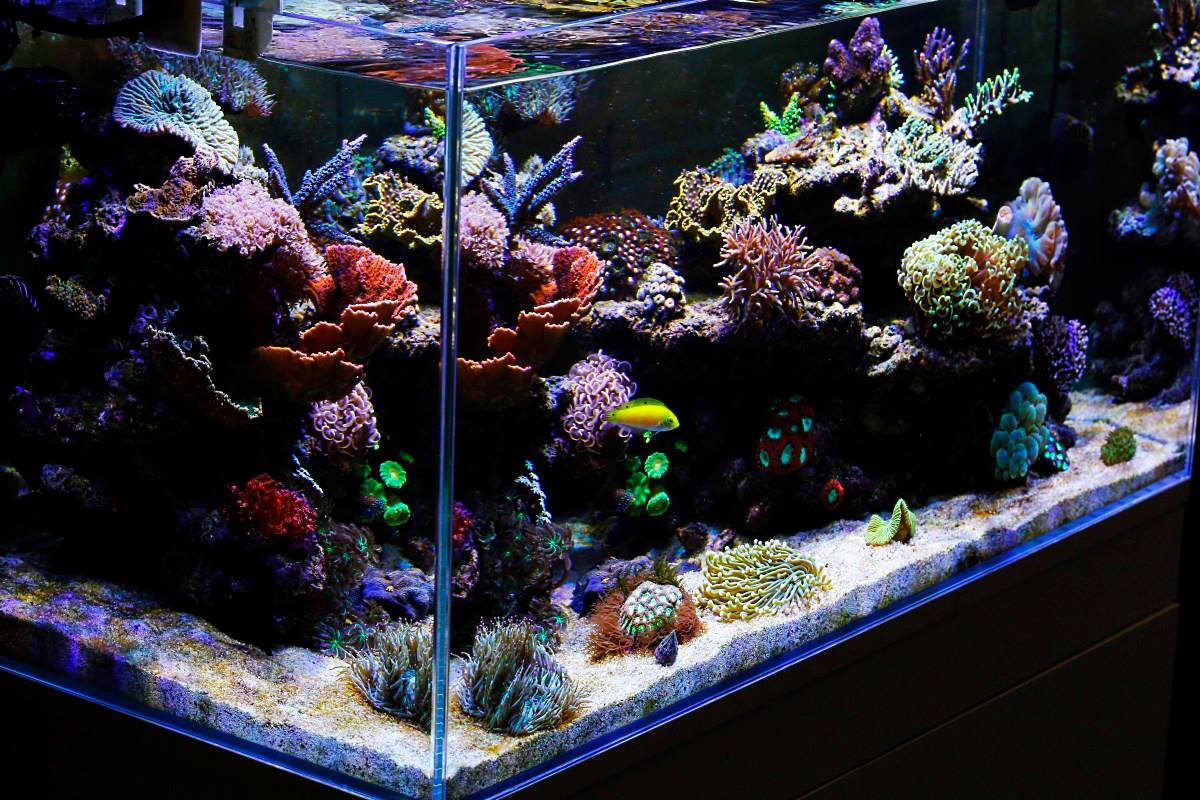 and led tank lighting zeiger setup filtration eco site lamp aquarium maintenance feet wide light the cm