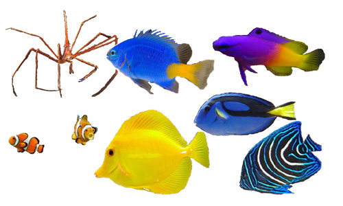 Saltwater, marine, fish for beginner to advanced aquariums