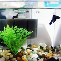 Betta Care, Sponge filter use for filtration