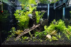 Healthy Aquarium Disease Prevention