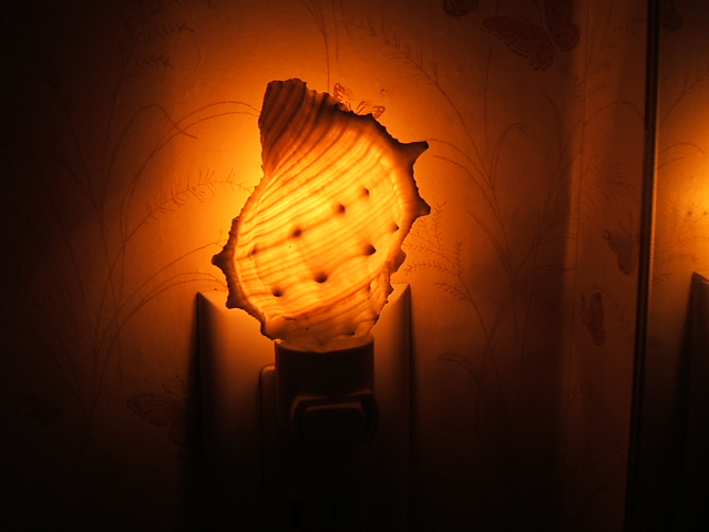 Completely new Shell Night Lights; Real Seashell Decorative Nitelites CD24
