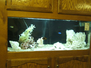 Saltwater Aquarium I also recently got running a looking better than I found it at Choices Counseling Center