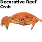 AUTHENTIC CONVEX CRABS: