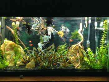Freshwater Aquarium, Fish Feeding Frenzy