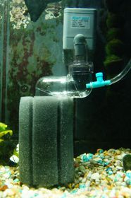 Sponge Filter used for CO2 Difuser for planted aquarium