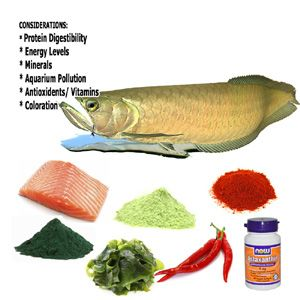 Aquarium Fish Food Requirements