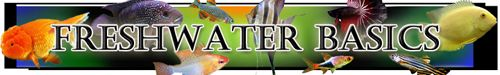 freshwater aquarium basics, care, filters, gravel, heaters, cycling, feeding, tank