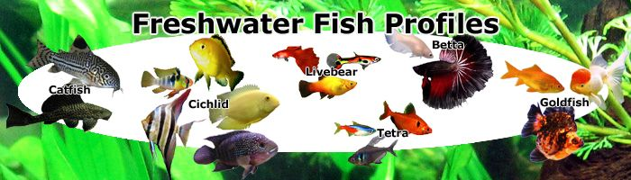 Freshwater Fish Profiles, Cichlids, Livebearers, Goldfish, Betas, more coming