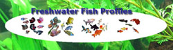 Freshwater Fish Profiles, including Betta Care
