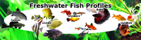 Cichlids, Livebearers, Catfish, Loach, Betta, Goldfish