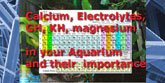 Importance of Calcium, magnesium and other electrolytes in clean aquariums