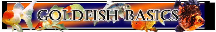 Goldfish Care, Basics, Information, Help, Filters, Water Chemistry