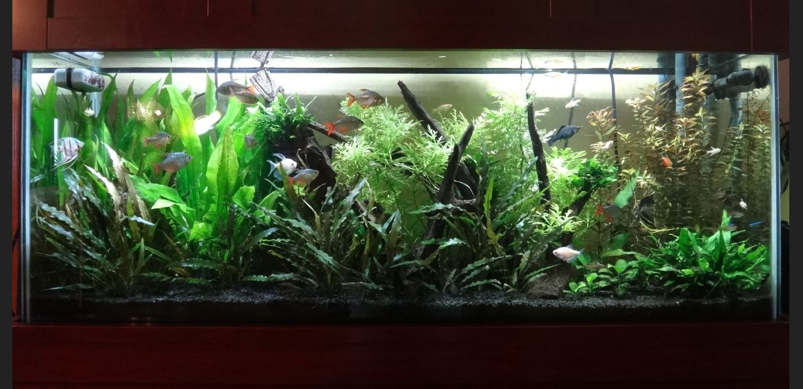 Freshwater Aquarium Set Up Help Suggested Filters Pumps