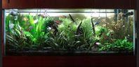 75 gallon freshwater aquarium with two GroBeam LED 1000 30 Watt