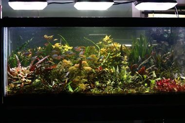 GroBeam LED Lights, Planted Aquarium EI method