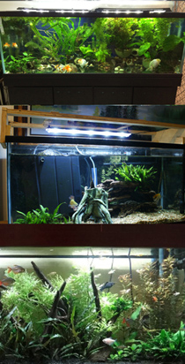 GroBeam LED and Marine White LED Lighting for planted 100 gallon aquarium