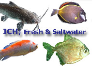 Aquarium Ich treatment identification and treatment