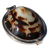 Large Brown Limpet Shell Coin Purse