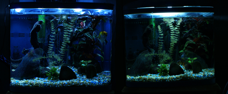 What color led 39 s make the fish plants pop page 2 the for Black light for fish tank