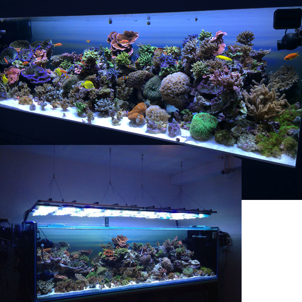Nano led aquarium fish tank lighting - Acropora Reef Tank With Aquaray Led Aquarium Lighting