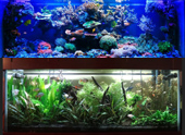 LED Lighting Freshwater, Reef Aquarium