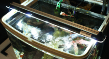 AquaRay LED Freshwater aquarium lighting on tank