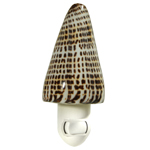 Lettered Cone Shell Night light
