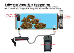 Marine Aquarium information, set up