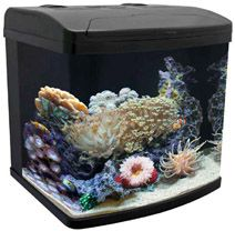 Salt Water Fish Tanks on Combined  Filters And Circulation Devices  Aquarium Turnover Rates