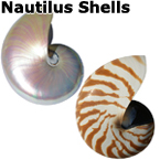 PEARL and Natural NAUTILUS