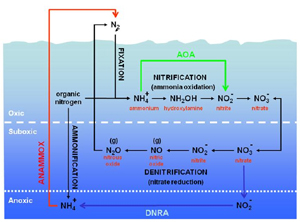 Complete Aquarium Nitrogen Cycle, Revised