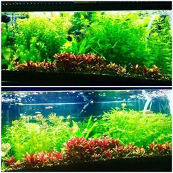 Planted aquarium with Grobeam 600