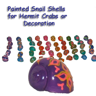 Hand Painted Snail Shells, Hermit Crab Homes