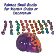 PAINTED SNAIL SHELLS;