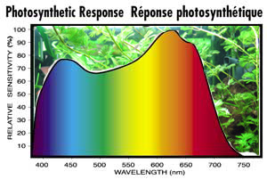 Photosyntheticaly Active Radiation | RM.
