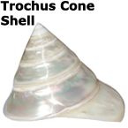 PEARL TROCHUS, 5�  $10.99, A beautiful seashell ocean decoration