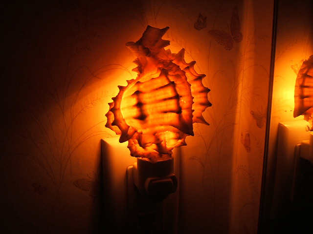 Well-known Shell Night Lights; Real Seashell Decorative Nitelites YG61