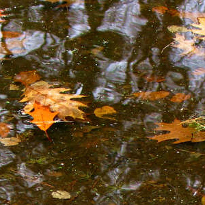 Pond Autumn Leaves, fall