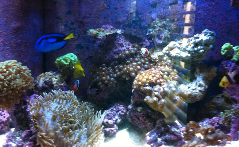 Marine aquarium care basics to advanced information for Saltwater reef fish