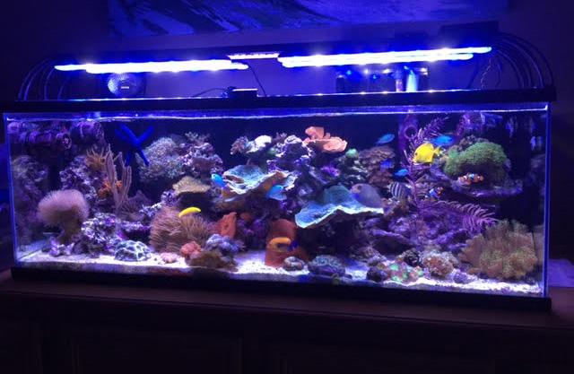 Softie Reef Aquarium with AquaRay 600 LED lights : led reef tank lighting - azcodes.com